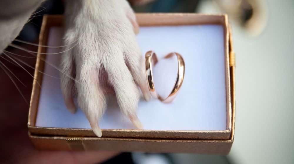 Jouw huisdier bij je bruiloft betrekken: zo doe je dat!